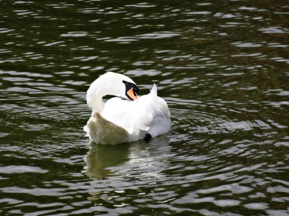 pato branco agua bru.JPG