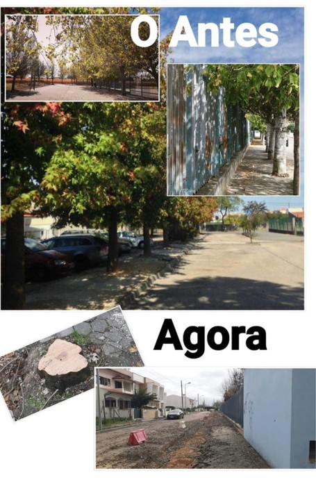 Arvoredo em Aveiro.jpg
