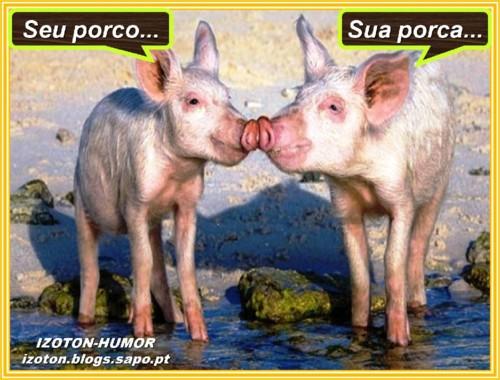 PORCA E PORCAA.jpg