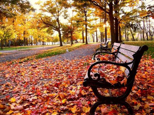 Tempos e tradições de outono...