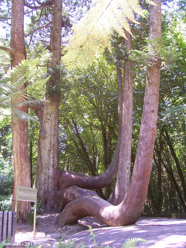 Jardins do Palácio da Pena - Árvores torcidas