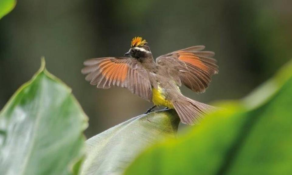 Aves de jardim I.jpg