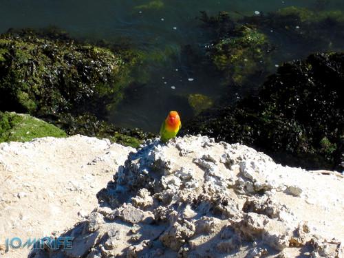Pássaro colorido no molhe da Figueira da Foz (1)