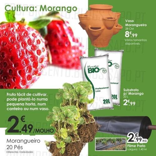 Sugestão | AGRILOJA | Cultivar morangos em casa !