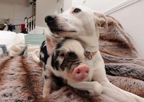 Porco e Cão.jpeg