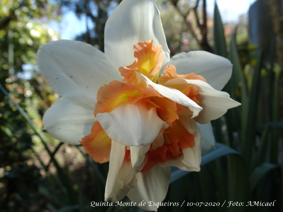 2 - Narciso - DSC05367.png