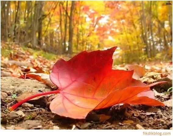 Outono1-2.jpg