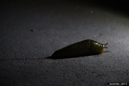 Lesma / Slug (25)