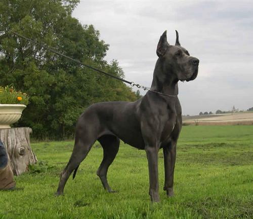 32132131-dogs.jpg