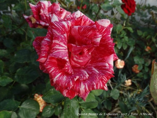Rosas - Junho 2017 - DSC02499.jpg