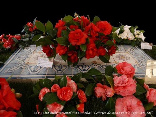 15 - Festa Internacional das Camélias - Celorico