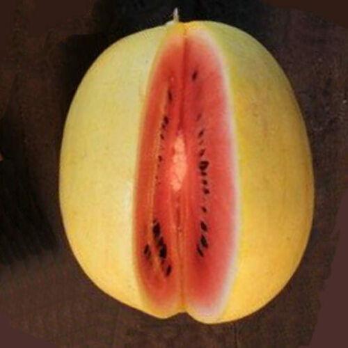 melancia amarela 2.jpg