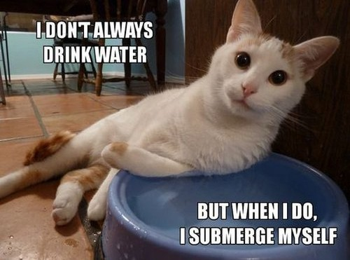 cat-humor-i-dont-always-drink-water-but-when-i-do-