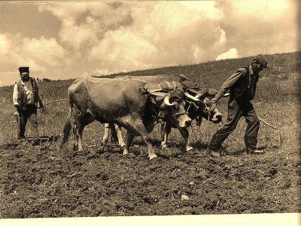 243-Lavrador a lavrar a terra