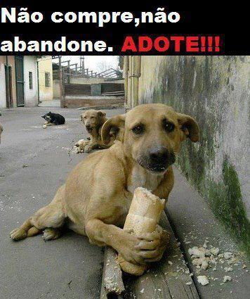 Não compre adopte