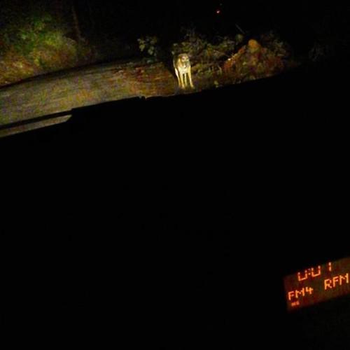 Cão na noite da serra.jpg