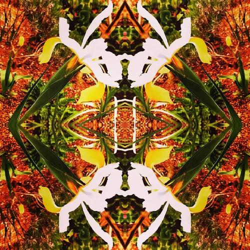 Simetrias by PP