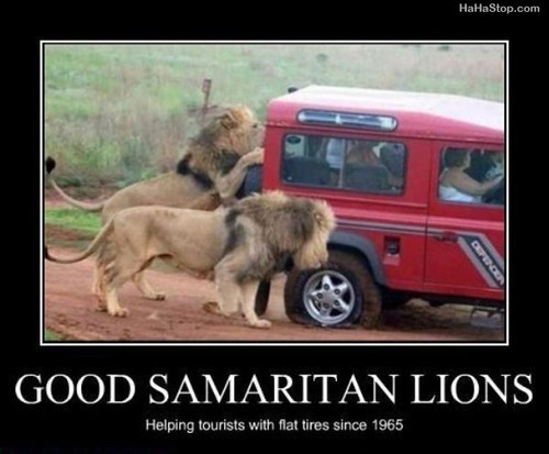 Good Samaritan Lions