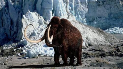 mamute-lanoso-620-original5.jpeg