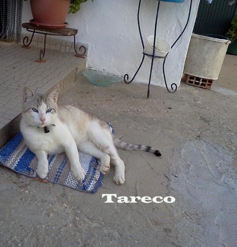 Tareco.jpg