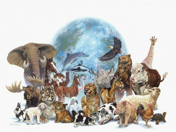 tipos-de-animais-e1480983426117.jpg