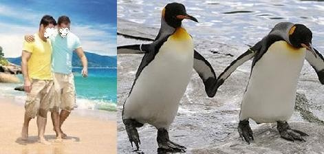 Gays caminhando na praia como dois pinguins