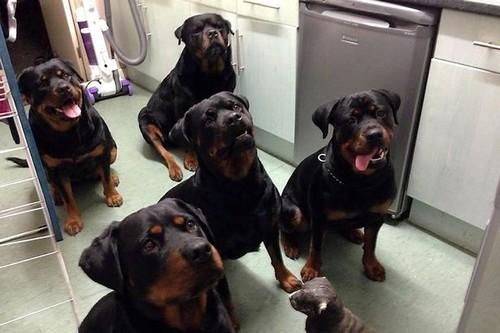 Heróis Caninos.jpg