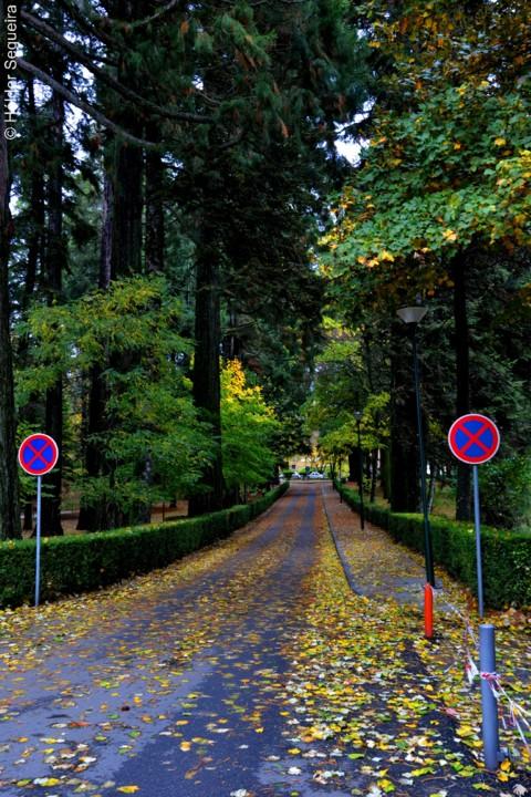Outono 2 - HS.jpg
