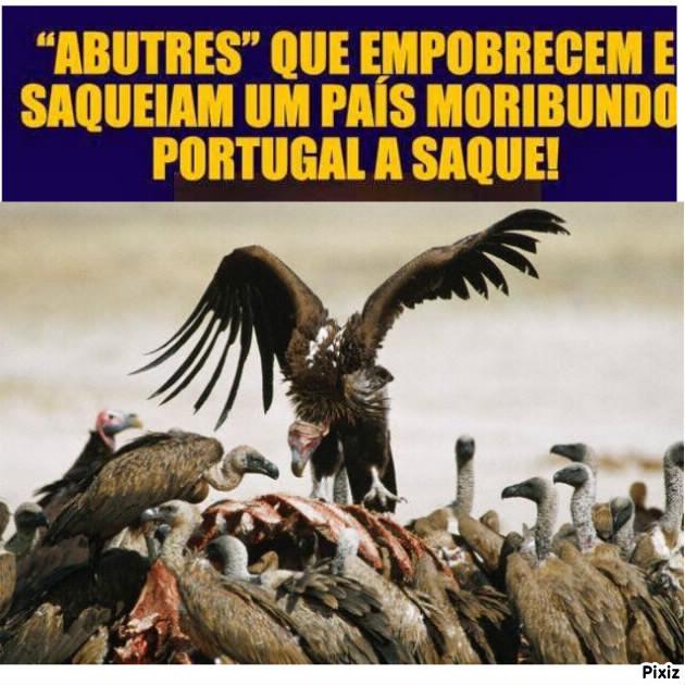 Abutres à portuguesa.jpg