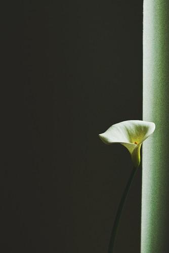 Flores2.jpeg
