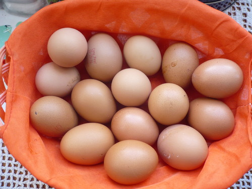 15 ovos