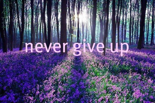 background-cute-flowers-never-give-up-pretty-Favim