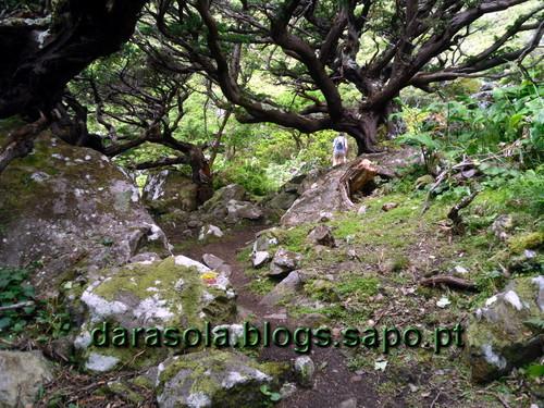 Azores_flores_faja_grande_17.JPG