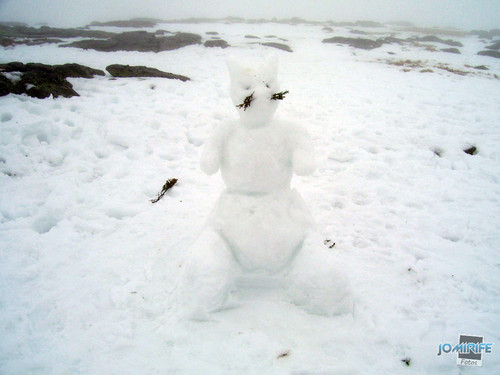 Boneco de neve em forma de gato (2)