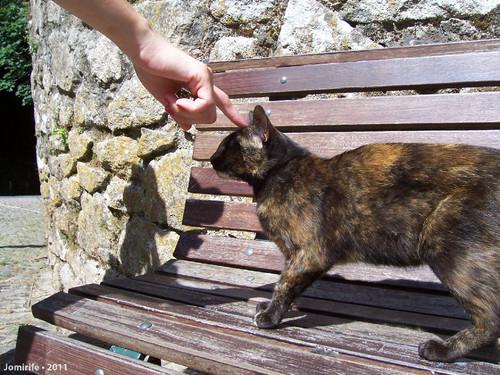 Dominar o gato com um dedo