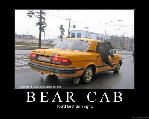 Bear Cab