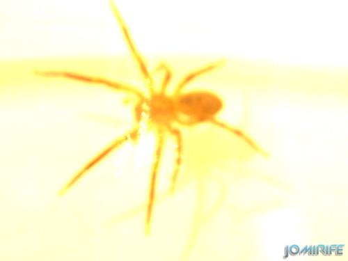 Aranha (4) Queimada pela luz