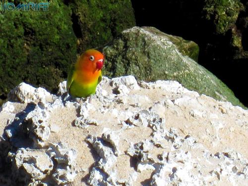 Pássaro colorido no molhe da Figueira da Foz (2)