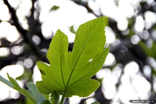 Árvore: Folha (2)