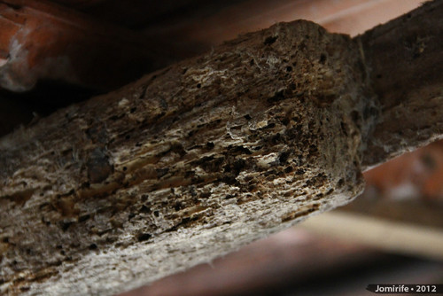 Wood with woodworm / Madeira com caruncho (1)