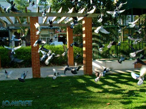 Jardim Municipal da Figueira da Foz (2) Pombas [EN] Municipal Garden of Figueira da Foz - Doves