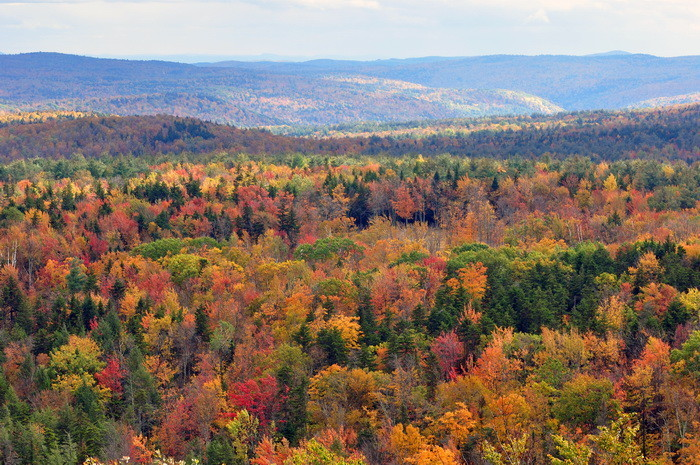 Vermont_fall_foliage_hogback_mountain1.jpg