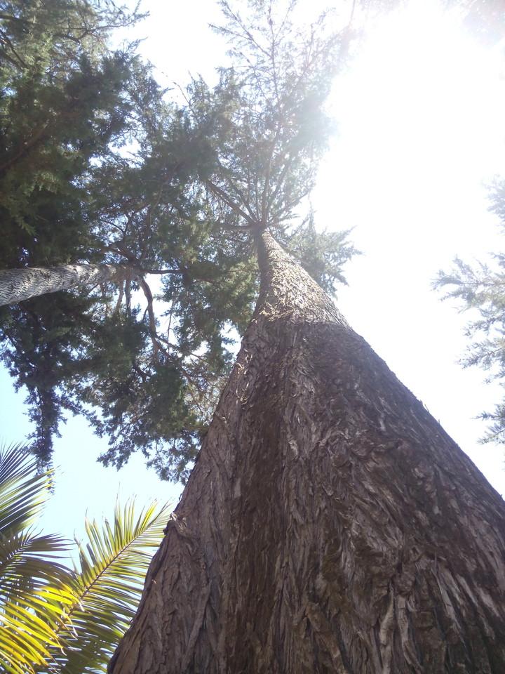árvore.jpg