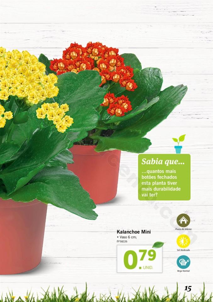 Mercado-de-Plantas-A-partir-de-04.04-01_014.jpg