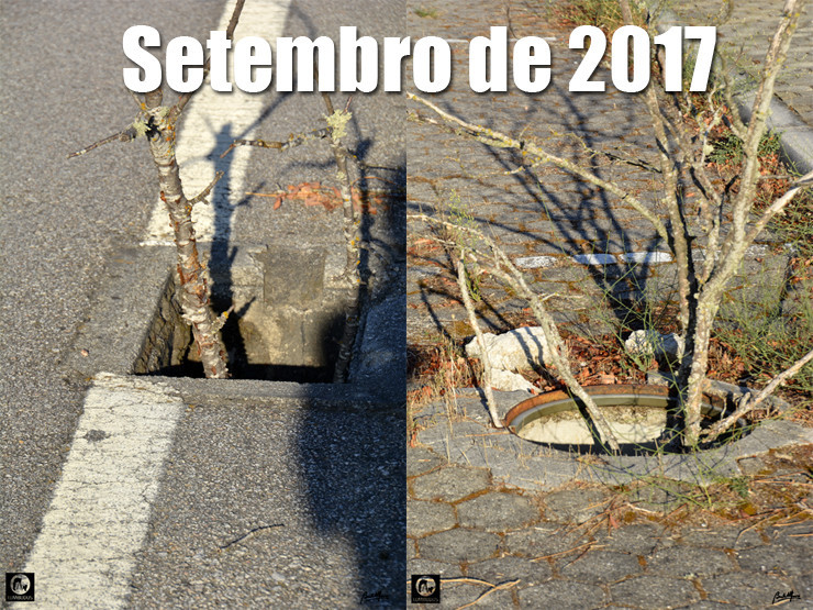 03 Setembro 2017 - 740.jpg