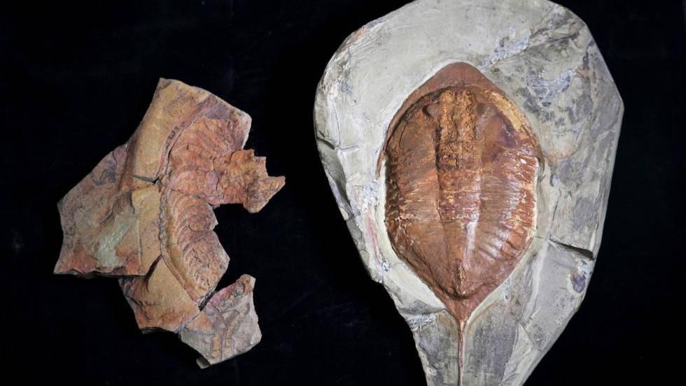 Trilobite descoberta em Marrocos com 478 milhões