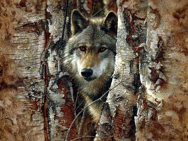 wolf7.jpg