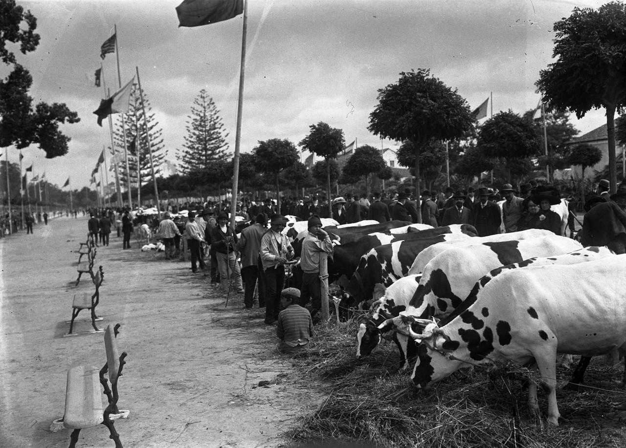 Concurso de raça bovina no Campo Grande promovido