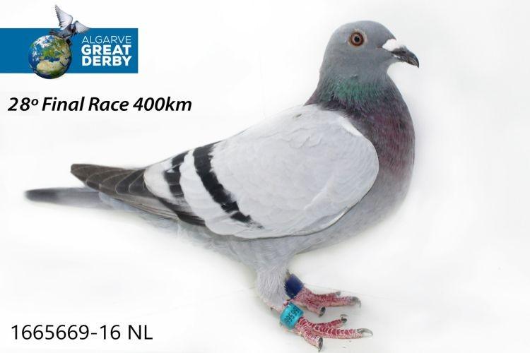 NL-1665669.jpg