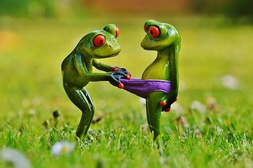 frogs-1347638__340.jpg